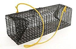crayfish-trap